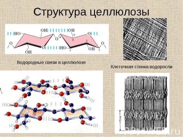 Структура целлюлозы