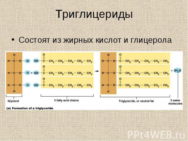Состоят из жирных кислот и глицерола Состоят из жирных кислот и глицерола