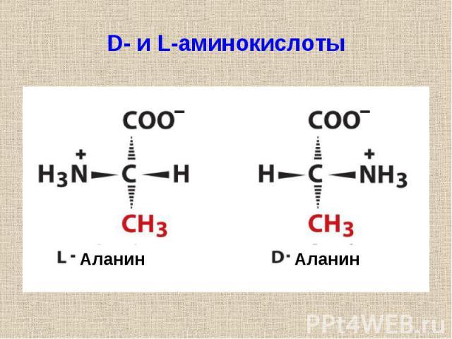 D- и L-аминокислоты