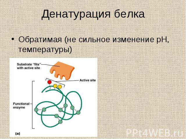 Обратимая (не сильное изменение pH, температуры) Обратимая (не сильное изменение pH, температуры)