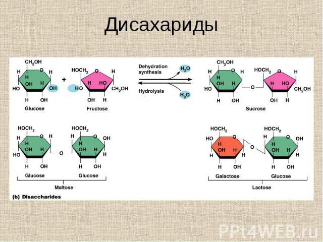 Disaccharides or double sugars Disaccharides or double sugars