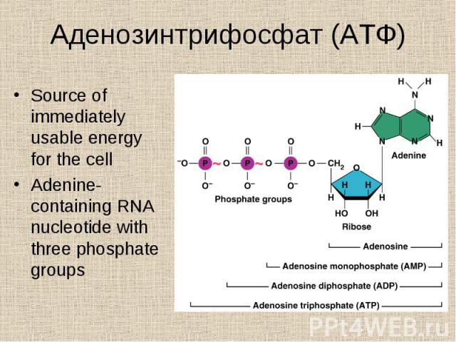 Source of immediately usable energy for the cell Source of immediately usable energy for the cell Adenine-containing RNA nucleotide with three phosphate groups