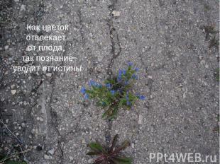 Как цветок отвлекает Как цветок отвлекает от плода, так познание уводит от истин