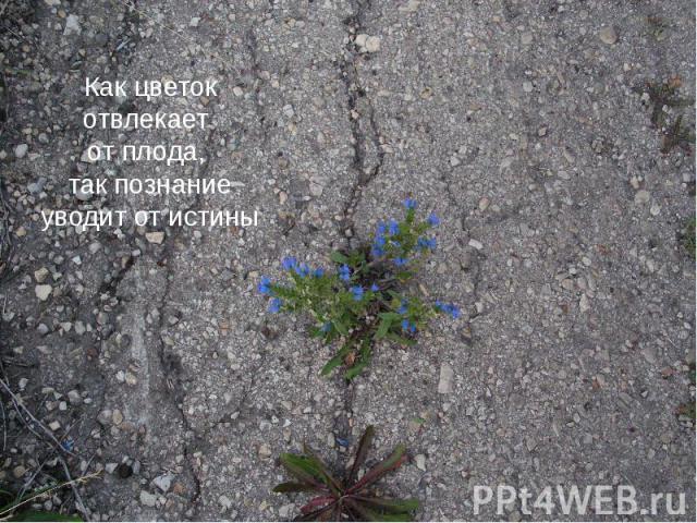Как цветок отвлекает Как цветок отвлекает от плода, так познание уводит от истины