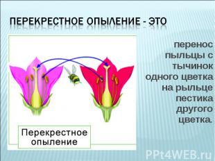перенос пыльцы с тычинок одного цветка на рыльце пестика другого цветка. перенос