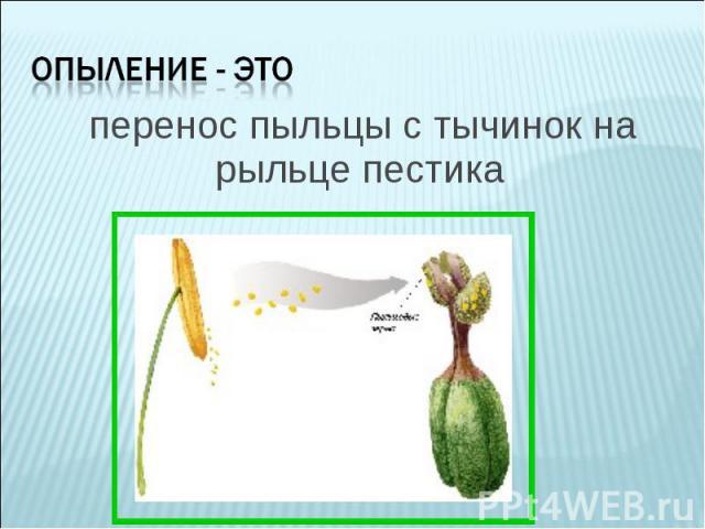 перенос пыльцы с тычинок на рыльце пестика перенос пыльцы с тычинок на рыльце пестика