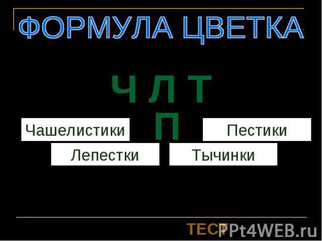 Ч Л Т П