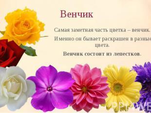 Самая заметная часть цветка – венчик. Самая заметная часть цветка – венчик. Имен