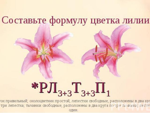 цветок правильный; околоцветник простой, лепестки свободные, расположены в два круга по три лепестка; тычинки свободные, расположены в два круга по три тычинки; пестик один. цветок правильный; околоцветник простой, лепестки свободные, расположены в …