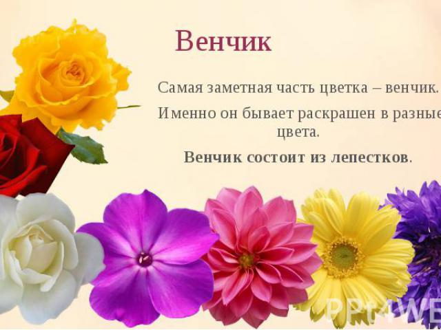 Самая заметная часть цветка – венчик. Самая заметная часть цветка – венчик. Именно он бывает раскрашен в разные цвета. Венчик состоит из лепестков.
