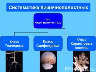 Систематика Кишечнополостных