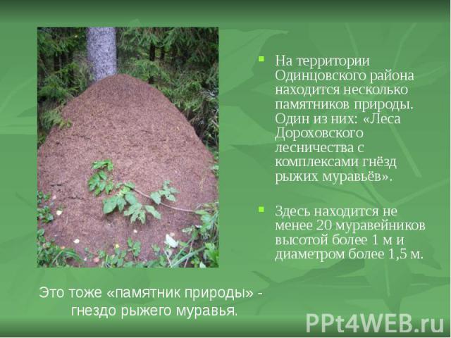 На территории Одинцовского района находится несколько памятников природы. Один из них: «Леса Дороховского лесничества с комплексами гнёзд рыжих муравьёв». На территории Одинцовского района находится несколько памятников природы. Один из них: «Леса Д…