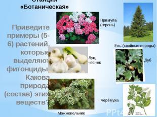 Станция «Ботаническая» Приведите примеры (5-6) растений, которые выделяют фитонц