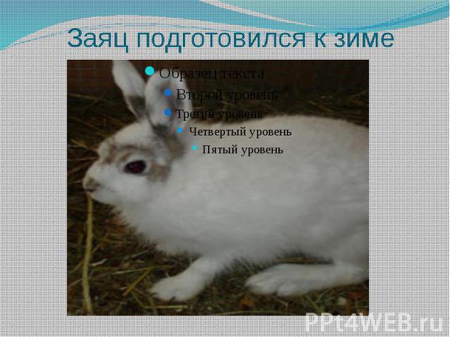Заяц подготовился к зиме