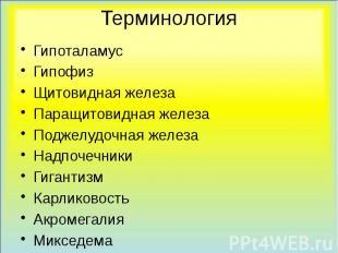 Терминология Гипоталамус Гипофиз Щитовидная железа Паращитовидная железа Поджелу