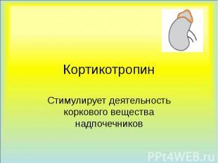 Кортикотропин Стимулирует деятельность коркового вещества надпочечников