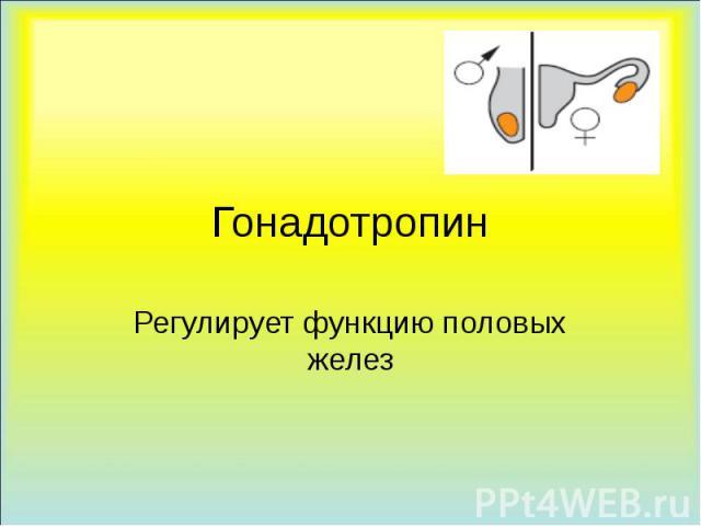 Гонадотропин Регулирует функцию половых желез