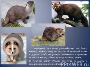 Животный мир очень разнообразен. Это белка, медведь, куница, заяц, лисица, дикий