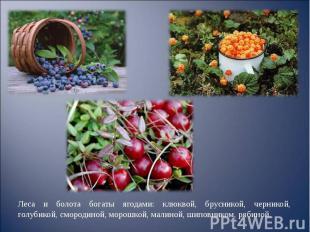 Леса и болота богаты ягодами: клюквой, брусникой, черникой, голубикой, смородино