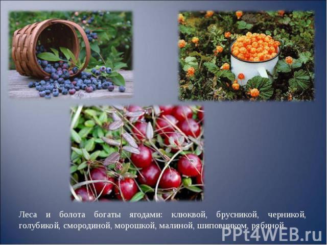 Леса и болота богаты ягодами: клюквой, брусникой, черникой, голубикой, смородиной, морошкой, малиной, шиповником, рябиной. Леса и болота богаты ягодами: клюквой, брусникой, черникой, голубикой, смородиной, морошкой, малиной, шиповником, рябиной.