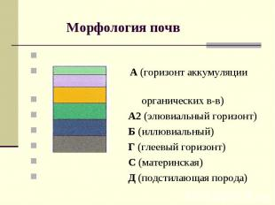 Морфология почв А (горизонт аккумуляции органических в-в) А2 (элювиальный горизо