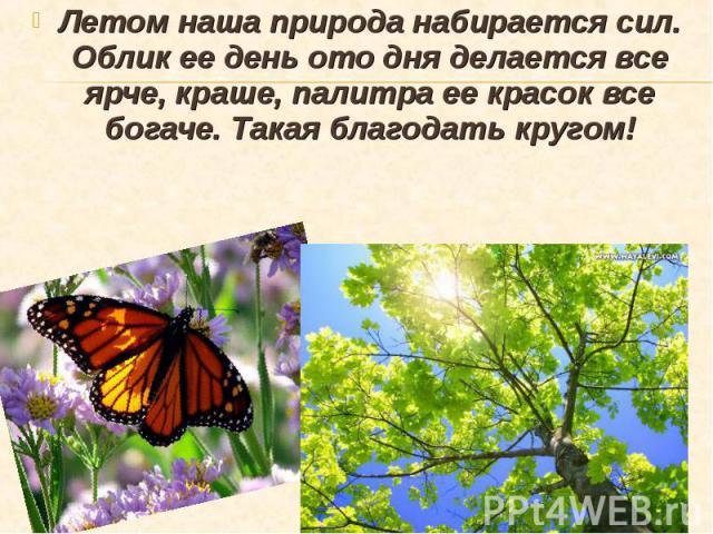Летом наша природа набирается сил. Облик ее день ото дня делается все ярче, краше, палитра ее красок все богаче. Такая благодать кругом! Летом наша природа набирается сил. Облик ее день ото дня делается все ярче, краше, палитра ее красок все богаче.…
