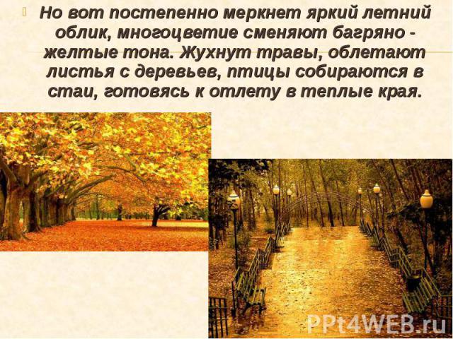 Но вот постепенно меркнет яркий летний облик, многоцветие сменяют багряно - желтые тона. Жухнут травы, облетают листья с деревьев, птицы собираются в стаи, готовясь к отлету в теплые края. Но вот постепенно меркнет яркий летний облик, многоцветие см…