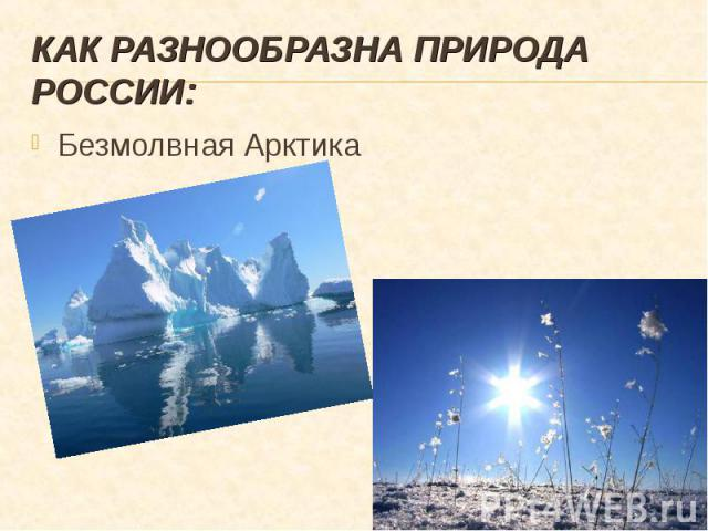 Безмолвная Арктика Безмолвная Арктика