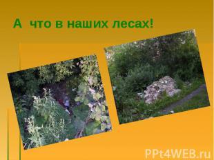 А что в наших лесах!