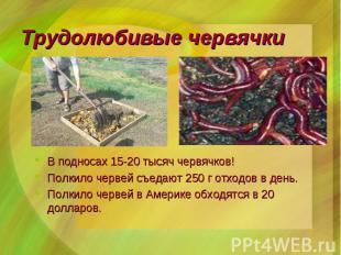 В подносах 15-20 тысяч червячков! В подносах 15-20 тысяч червячков! Полкило черв