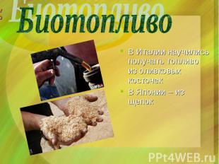 В Италии научились получать топливо из оливковых косточек В Японии – из щепок