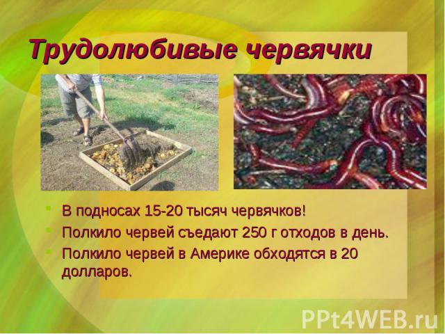 В подносах 15-20 тысяч червячков! В подносах 15-20 тысяч червячков! Полкило червей съедают 250 г отходов в день. Полкило червей в Америке обходятся в 20 долларов.
