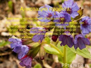 Аннотация проекта: Тема моего исследования «Первоцветы». Что представляют собой