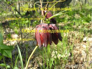 Предмет исследования: Раннецветущие растения.