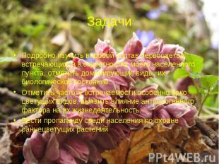 Задачи Подробно изучить видовой состав первоцветов, встречающихся в окрестностях