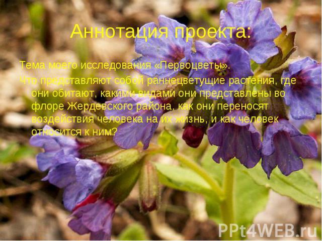 Аннотация проекта: Тема моего исследования «Первоцветы». Что представляют собой раннецветущие растения, где они обитают, какими видами они представлены во флоре Жердевского района, как они переносят воздействия человека на их жизнь, и как человек от…