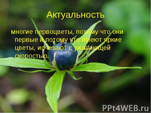 Актуальность многие первоцветы, потому что они первые и потому что имеют яркие цветы, исчезают с ужасающей скоростью.