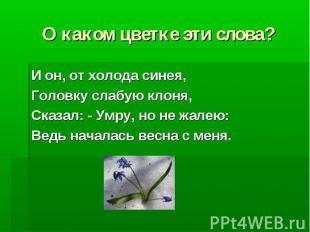 О каком цветке эти слова? И он, от холода синея, Головку слабую клоня, Сказал: -