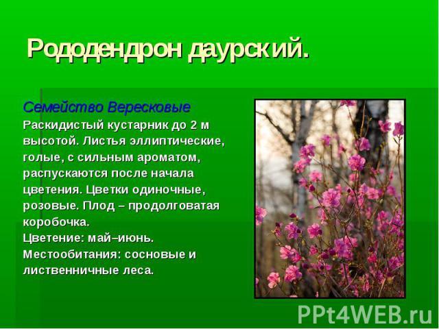 Рододендрон даурский. Семейство Вересковые Раскидистый кустарник до 2 м высотой. Листья эллиптические, голые, с сильным ароматом, распускаются после начала цветения. Цветки одиночные, розовые. Плод – продолговатая коробочка. Цветение: май–июнь. Мест…