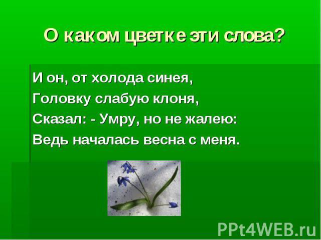 О каком цветке эти слова? И он, от холода синея, Головку слабую клоня, Сказал: - Умру, но не жалею: Ведь началась весна с меня.