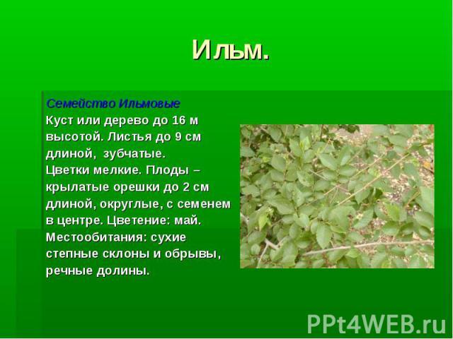 Ильм. Семейство Ильмовые Куст или дерево до 16 м высотой. Листья до 9 см длиной, зубчатые. Цветки мелкие. Плоды – крылатые орешки до 2 см длиной, округлые, с семенем в центре. Цветение: май. Местообитания: сухие степные склоны и обрывы, речные долины.