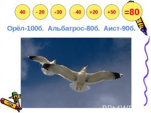 Орёл-100б. Альбатрос-80б. Аист-90б.
