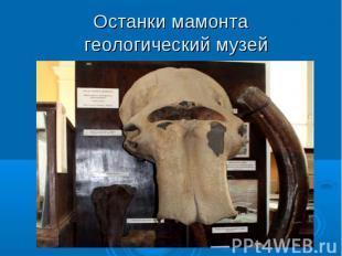 Останки мамонта геологический музей