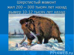 Шерстистый мамонт жил 200 – 300 тысяч лет назад вымер 10-12 тысяч лет назад