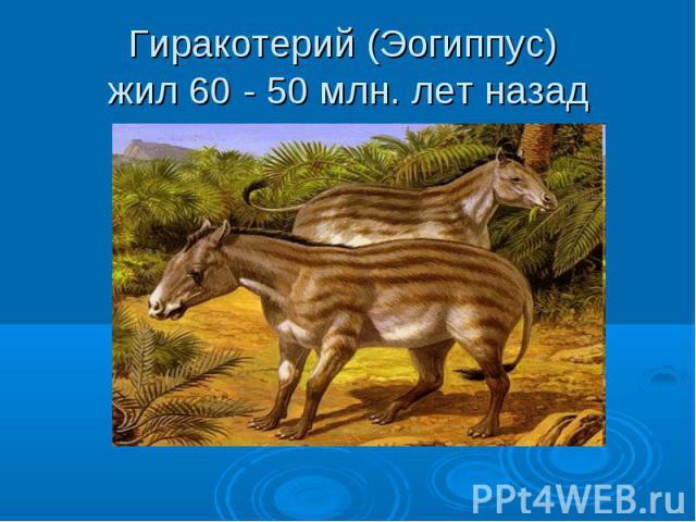 Гиракотерий (Эогиппус) жил 60 - 50 млн. лет назад