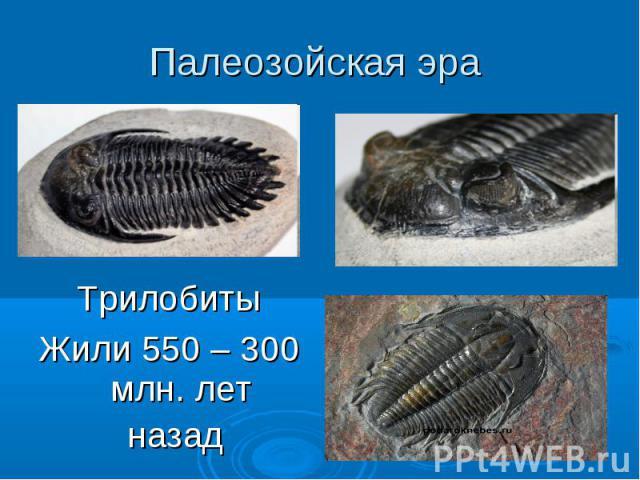 Палеозойская эра Трилобиты Жили 550 – 300 млн. лет назад