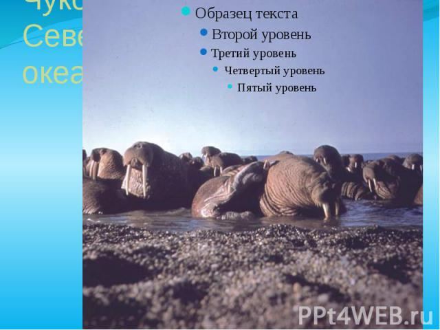 Чукотское море – окраина Северного Ледовитого океана