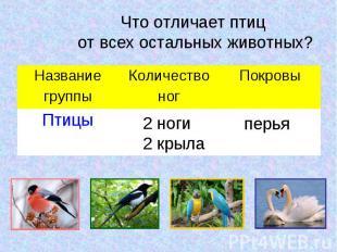 Что отличает птиц от всех остальных животных?