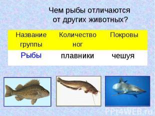 Чем рыбы отличаются от других животных?