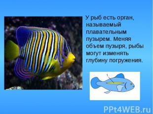 У рыб есть орган, называемый плавательным пузырем. Меняя объем пузыря, рыбы могу